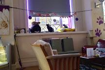 Purrple Cat Cafe, Glasgow, United Kingdom