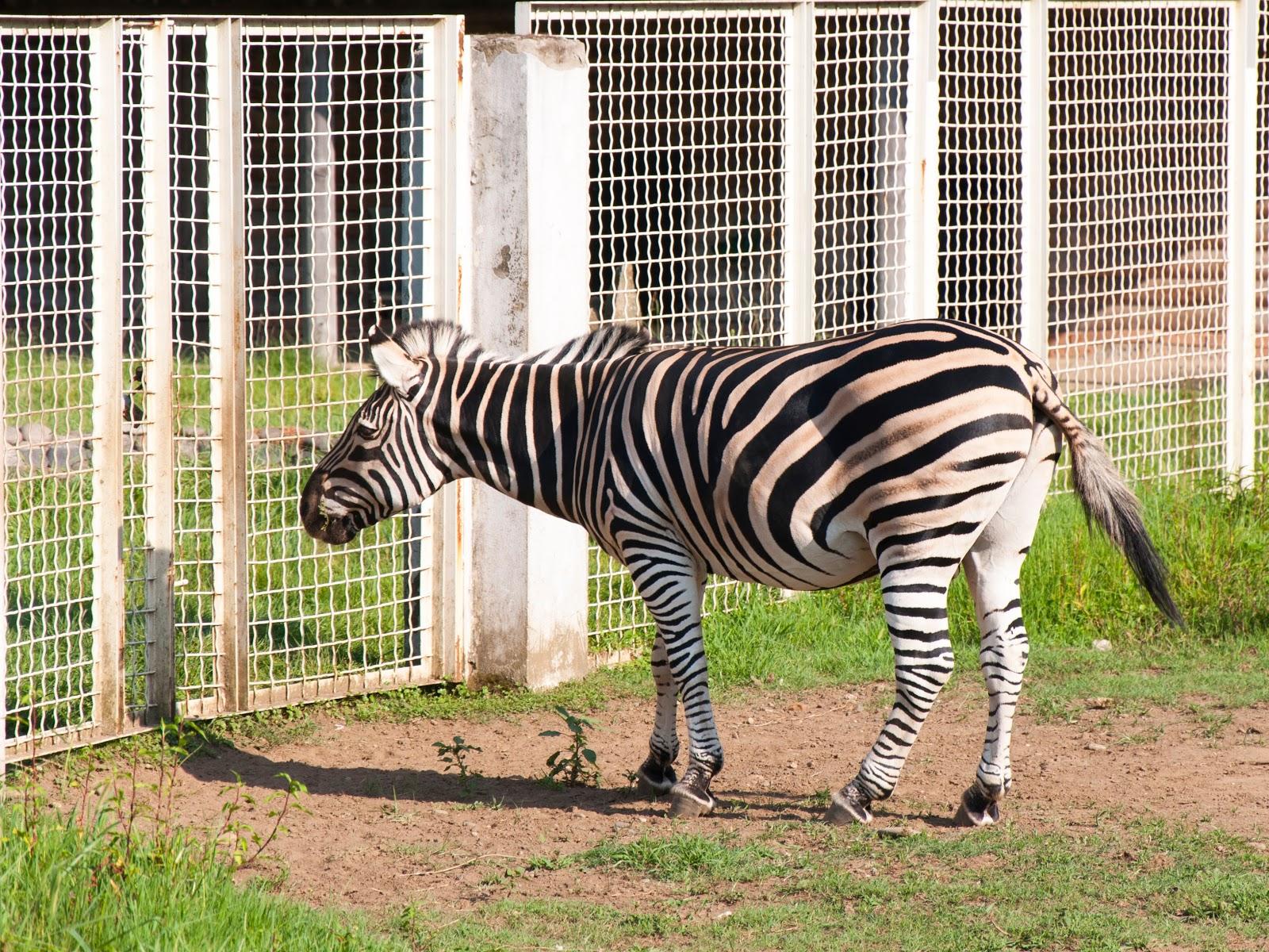 Batumi City Zoo