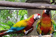 Neo Fauna CR, Jaco, Costa Rica