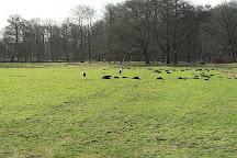 Ruins of Castle Brederode, Santpoort-Zuid, Holland