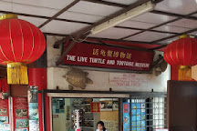 The Live Turtle and Tortoise Museum, Singapore, Singapore