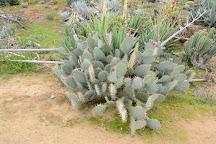 Cactus Country, Strathmerton, Australia