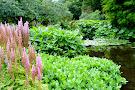 Beth Chatto's Plants & Gardens