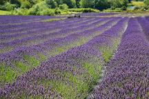 Pelindaba Lavender Farm, Friday Harbor, United States
