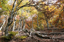 Parque Natural Hayedo de Tejera Negra, Cantalojas, Spain