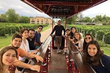 WineBeetle, Coquimbito, Argentina