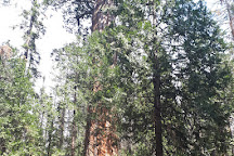 Nelder Grove, California, United States