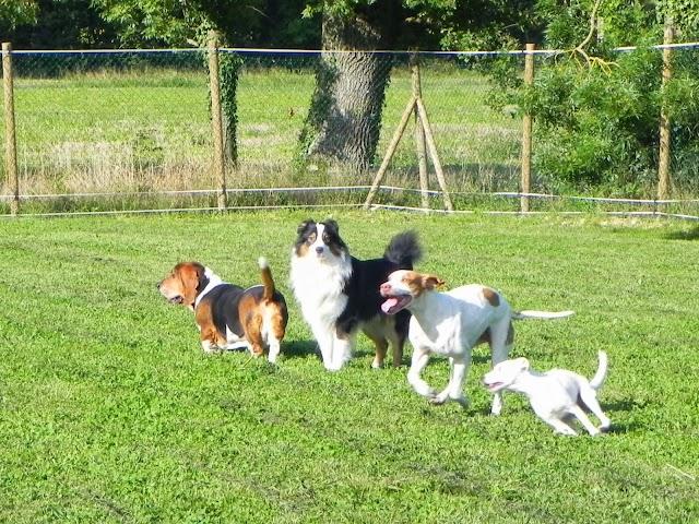 Les Terres d'Azade - Pension Canine