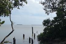 Flamingo, Everglades National Park, United States