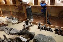 Paleon Museum in Glenrock, Glenrock, United States
