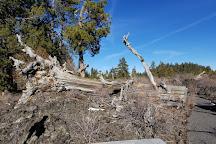 Lava Cast Forest Trail, La Pine, United States