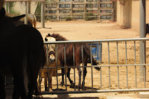 Easy Horse Care Rescue Centre, Rojales, Spain