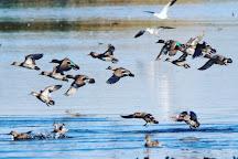 Cattail Marsh, Beaumont, United States