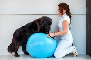 Tierphysiotherapie Vita Animal Corinna Arlt