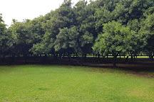 Medowie Macadamias, Medowie, Australia