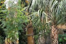 Tree Sculptures, Galveston, United States