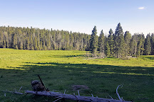 Santa Fe National Forest, New Mexico, United States