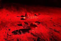 Barna Mia Nocturnal Wildlife Experience, Dryandra, Australia