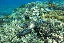 Apo Island Marine Reserve, Apo Island, Philippines