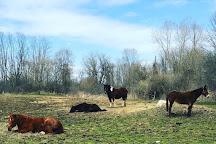 Maybury Riding Stable, Northville, United States