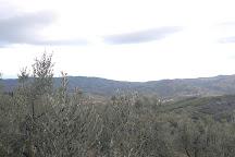 Azienda Agricola Altiero, Greve in Chianti, Italy