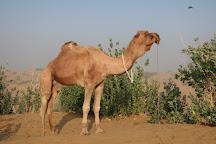 Thar Desert Tours, Jaisalmer, India