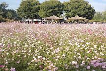 Haneul Park, Seoul, South Korea
