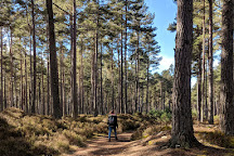 Anagach Woods, Grantown-on-Spey, United Kingdom