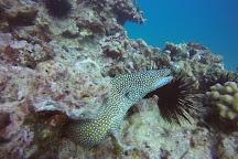 Oahu Diving, Honolulu, United States
