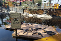 Smugglers Cove Adventure Golf, Fort Myers Beach, United States