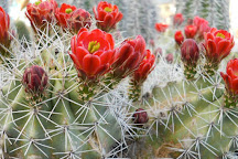 Cactus Joe's Blue Diamond Nursery, Las Vegas, United States