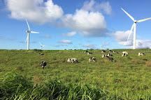 Hawi Wind Farm, Hawi, United States