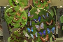 Konya Tropical Butterfly Garden, Konya, Turkey