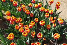 Tulipani Italiani, Arese, Italy