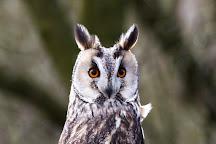 Kent Owl Academy, Maidstone, United Kingdom