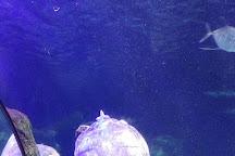 SEA LIFE Charlotte-Concord Aquarium, Concord, United States