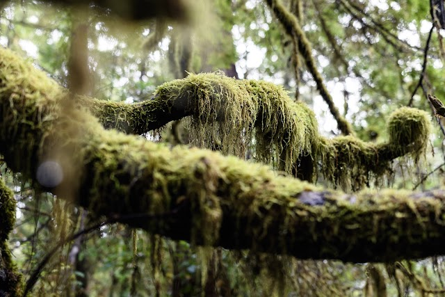 Visitor Parking Wild Pacific Trail