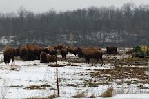 The Bison Corral, Schellsburg, United States