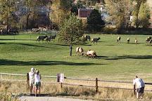 Downtown Estes Park, Estes Park, United States