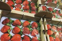 Laxmi Strawberry Farm, Mahabaleshwar, India