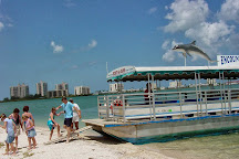 Encounters With Dolphins, Clearwater, United States