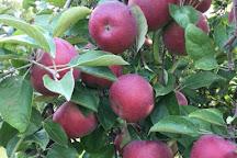 Johnston Fruit Farms, Swanton, United States