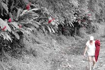 Afu Aau Waterfall, Savai'i, Samoa