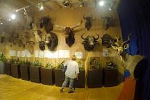 Naturmuseum Salzkammergut - Treffpunkt Natur, Ebensee am Traunsee, Austria