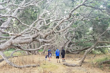 Los Osos Oaks State Reserve, Los Osos, United States