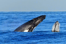 Oz Whale Watching, Sydney, Australia