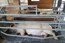 Green Meadows Petting Farm, Ijamsville, United States