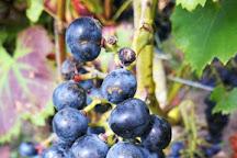 Zilver Cruys Winery, Boezinge, Belgium