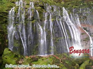 BONGARÁ EXPLORER 6