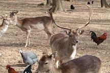 Parco Natura La Selvott, Formello, Italy